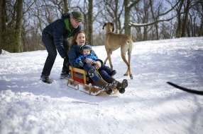 Boston Sledding